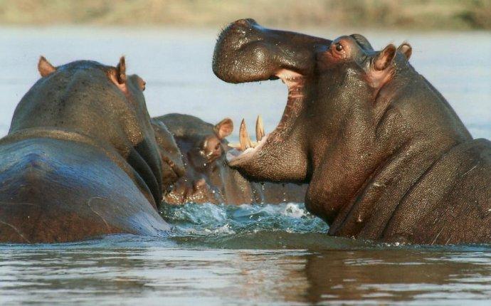 10 странных способностей животных - Телеканал 360