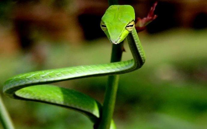 10 удивительных животных тропических лесов | Fresher - Лучшее из