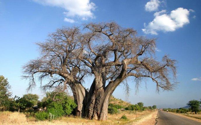 Африканские эндемики