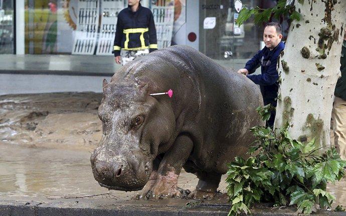 Фото и видео: в Тбилиси после наводнения дикие звери из зоопарка