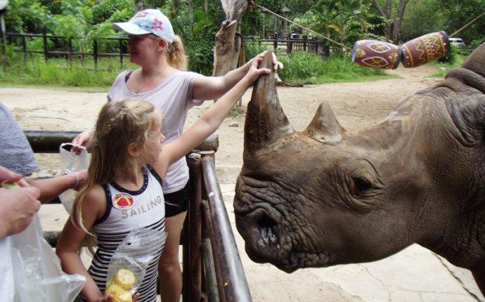 Носороги, мартышки, тигры, битуронги и другие животные.: rainbow_s