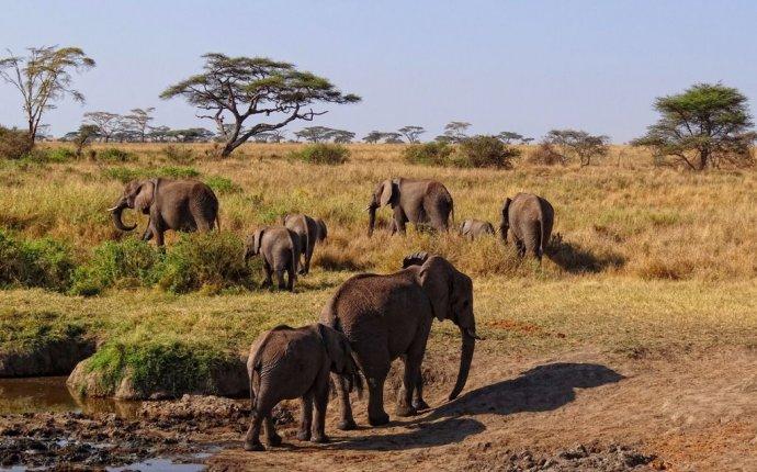 Публикация: Национальный парк Серенгети