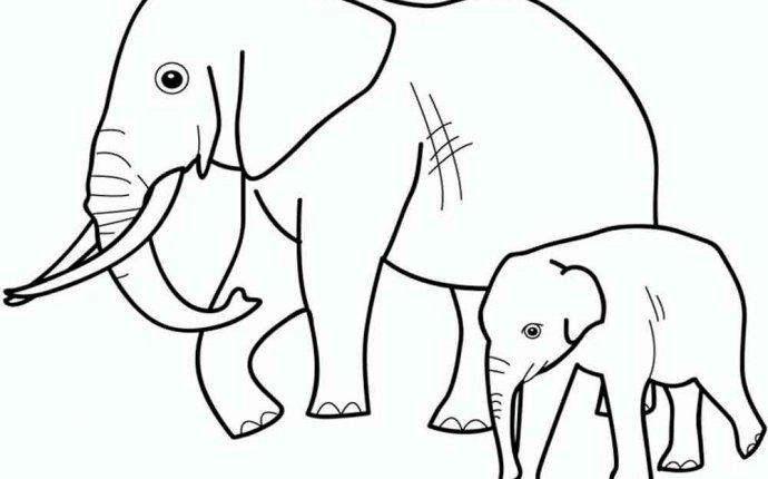 Раскраска про диких животных - Животные : Раскраски для детей на