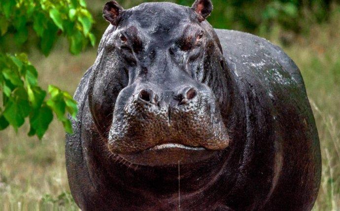 Самые опасные животные мира. Топ-15 с фото