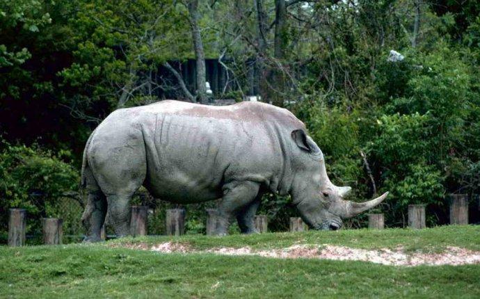 Самое интересное в мире » Самые большие животные в мире