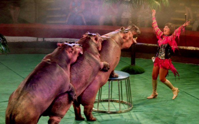 Шоу Танцующие бегемоты - Афиша Саратова. Культура. Где отдохнуть