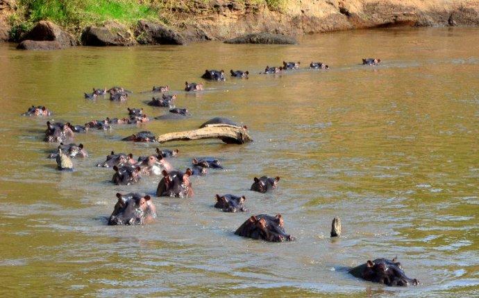 В диких условиях: путешествие по кенийской саванне / Фотографии