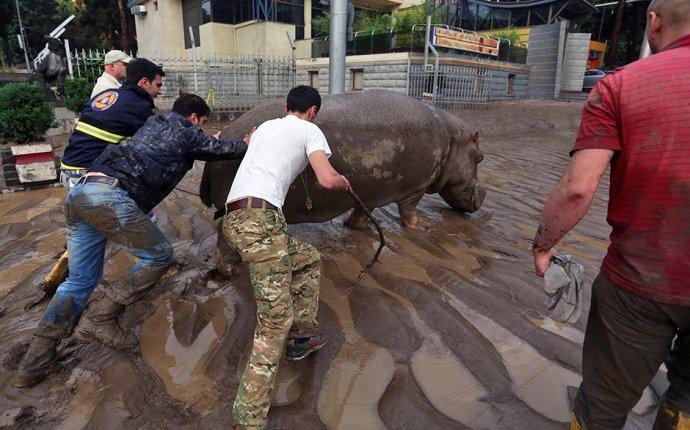 В Тбилиси смыло зоопарк - engine_runtime